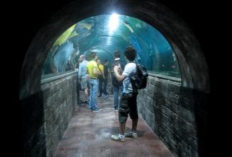 Kursanci w oceanarium